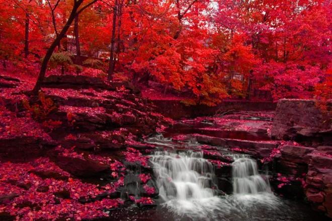 el rojo en la naturaleza