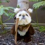Perrito disfrazado como Ewok, los personajes parecidos a ositos en la Guerra de las Galaxias