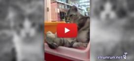 Relajante video de un gato que le da un masaje a su compañero