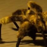 El video del perro araña mutante es simplemente sensacional
