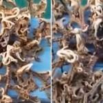 Video de la criatura marina que parece extraterrestre
