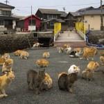 lugar donde la población de gatos es muy superior a la de humanos