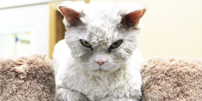 Le salió competencia al Grumpy cat. Conozcan al gato de mirada aterradora