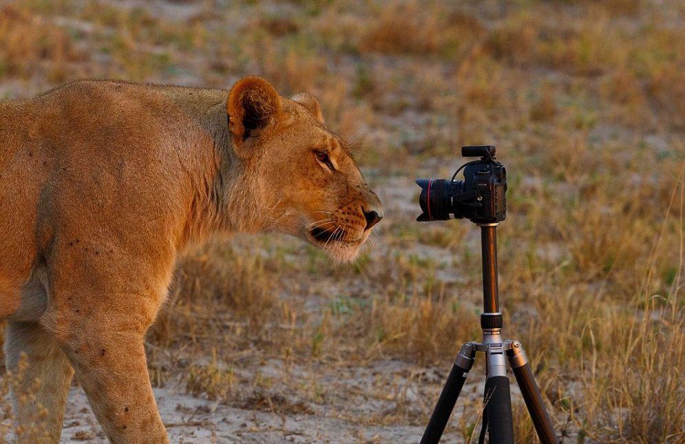 La fiebre de las selfies también contagio a los animales salvajes