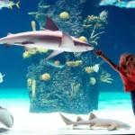 Si crees que las peligrosas criaturas marinas no responden al cariño de los humanos, mira este video