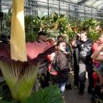 Conozcan la extraña y gigante flor con el aroma más apestoso del mundo