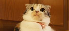 Así se asustan los gatos. ¡Mira sus graciosas reacciones en este video!