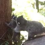 Qué difícil es para una madre enseñarle a su hijo a trepar los árboles