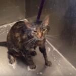 En video, gato habla literalmente para pedir que no lo mojen más