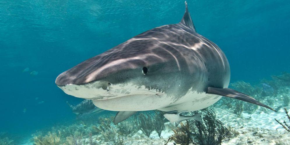 ¿Es este el tiburón más grande del mundo? Aterradoras fotos de la bestia marina
