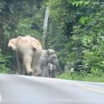 manada de furiosos elefantes