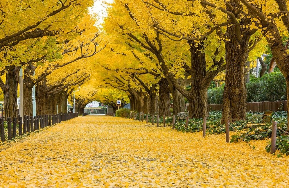 Los más sorprendentes túneles formados por árboles alrededor del mundo