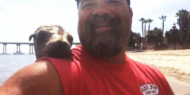No está en cautiverio: esta es la foca curiosa que se subió a un bote para salir en la selfie