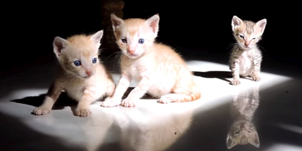gatitos a punto de morir