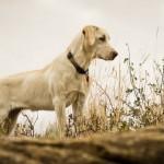 un perro esperó por la llegada de su dueña desaparecida