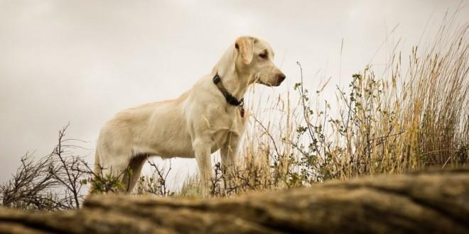 Conmovedora manera en la que un perro esperó por la llegada de su dueña desaparecida