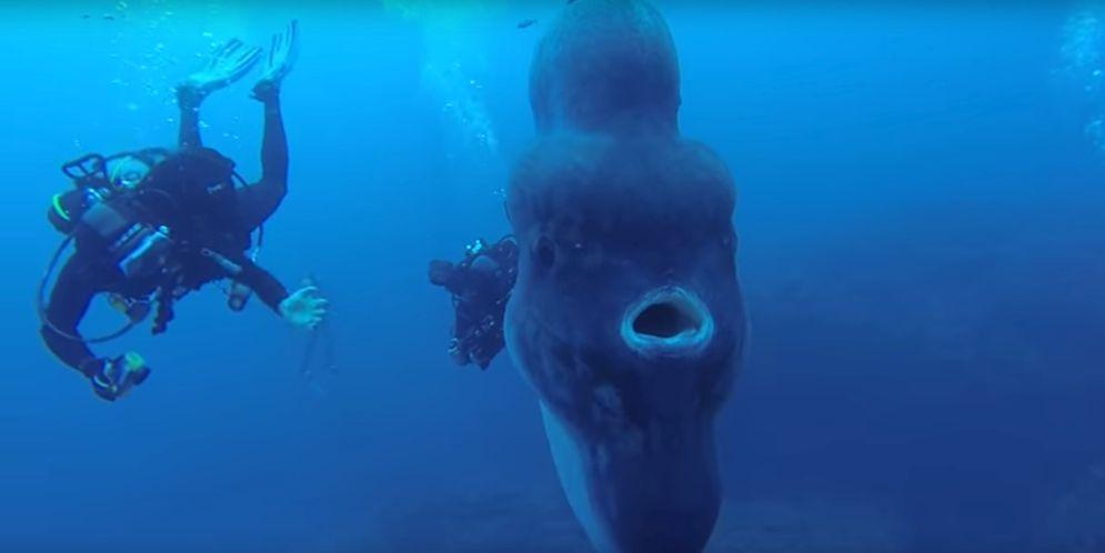 Un grupo de buzos en Portugal nunca esperaron encontrarse con esta masiva criatura