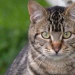 Guiada por su amor e instinto maternal, una gata luchó por sus gatitos hasta recuperarlos