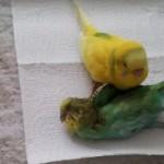 aves sienten impotencia ante la muerte