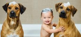 Tener un perro como mascota trae un beneficio para los niños que muy seguramente desconoces