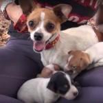 conmovedores videos sobre rescates de perritos