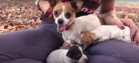 De todos los conmovedores videos sobre rescates de perritos, este será uno de tus favoritos