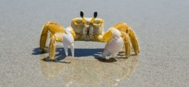Filmando un cangrejo, una mujer fue testigo de algo totalmente inesperado