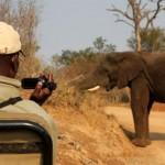Video registró aterrador encuentro entre camarógrafos y un elefante furioso
