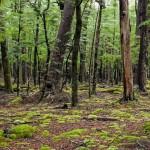Un bosque que respira. Un extraño fenómeno natural fue captado en Canadá