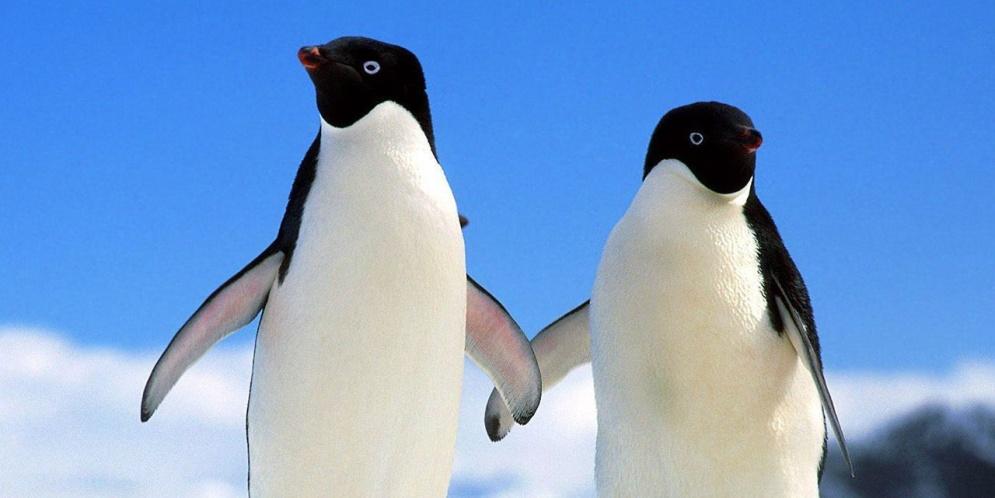 oscuro secreto de los pinguinos