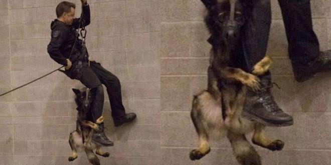 Conoce la verdadera historia del perro que lucha por su vida aferrado a la pierna de un policía