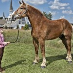 Big Jake el caballo más alto del mundo