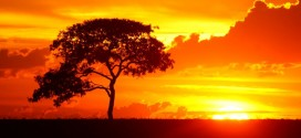 En 45 años, olas de calor sin precedentes afectarán a millones de personas ¿Cuáles serán las zonas más afectadas?