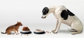 ¿Por qué los perros pequeños viven más que los perros grandes? Interesante teoría