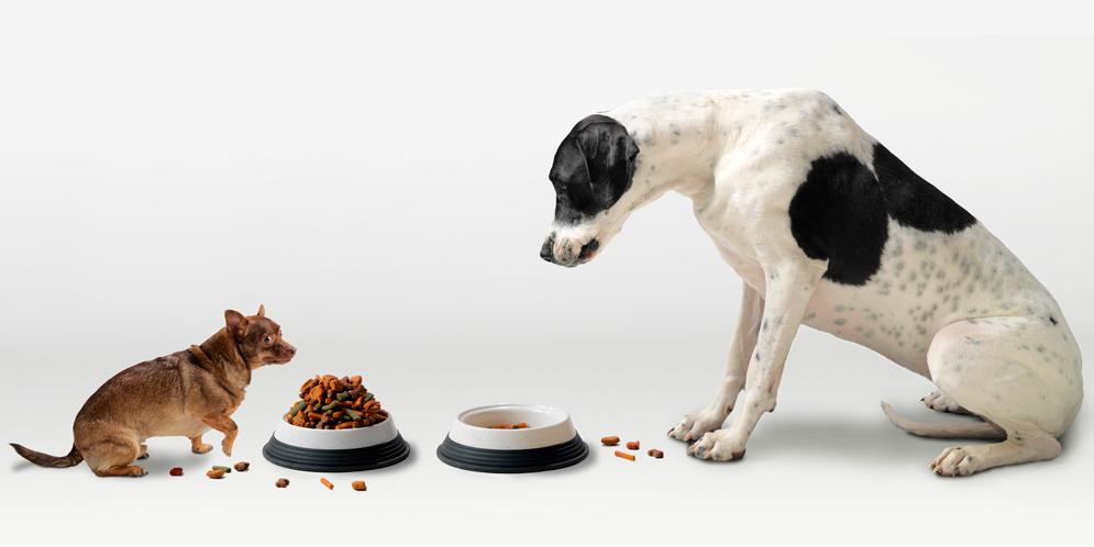 los perros pequeños viven más que los perros grandes
