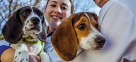 Por fin se logró la fecundación in vitro en los perros ¿Por qué no se había logrado antes?