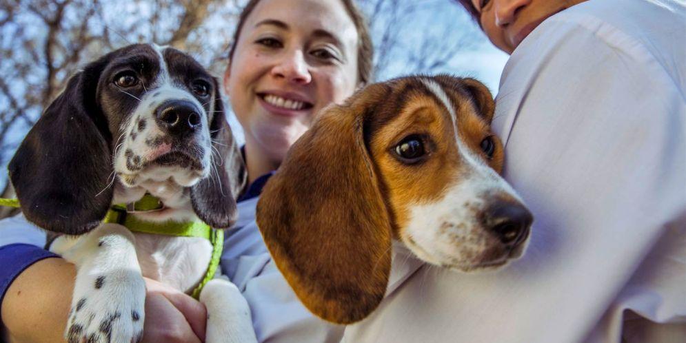 Por fin se logró la fecundación in vitro en los perros
