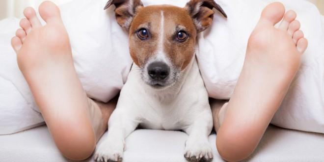¿Qué tiene de bueno dormir con mascotas? Revelador estudio