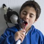 pájaro huérfano que vive en libertad con una familia humana
