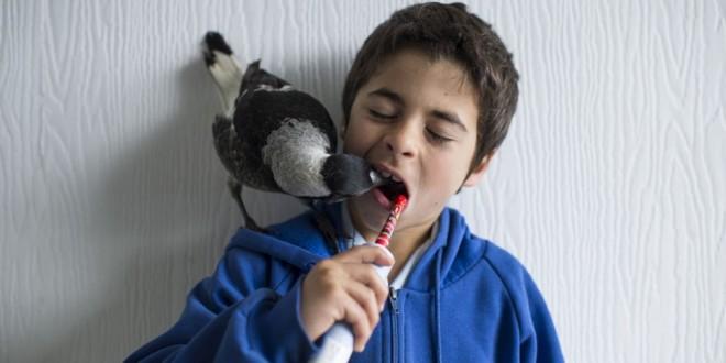 Historia en imágenes de un pájaro huérfano que vive en libertad con una familia humana
