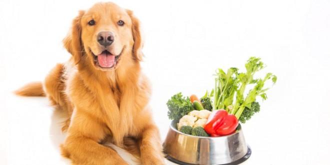 ¿Tu mascota está en peligro y no lo sabes? 18 alimentos que no deben comer los perros