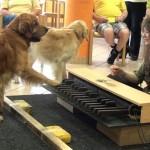 Maravillosa demostración de la capacidad auditiva de los perros con respecto a la música