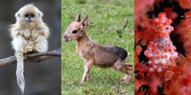Fotos de animales extraordinarios que no sabías que existían
